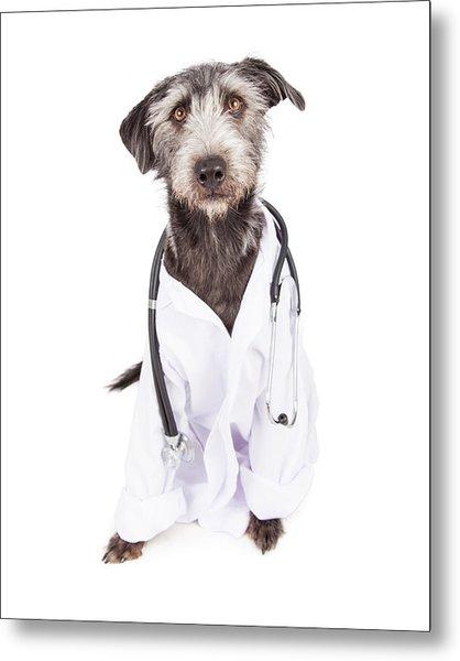 Dog Dressed As Veterinarian Metal Print