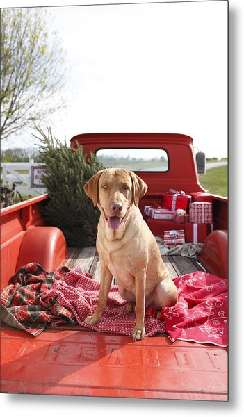 Dog In Truck Bed With Pine Tree Outdoors Metal Print by Gillham Studios