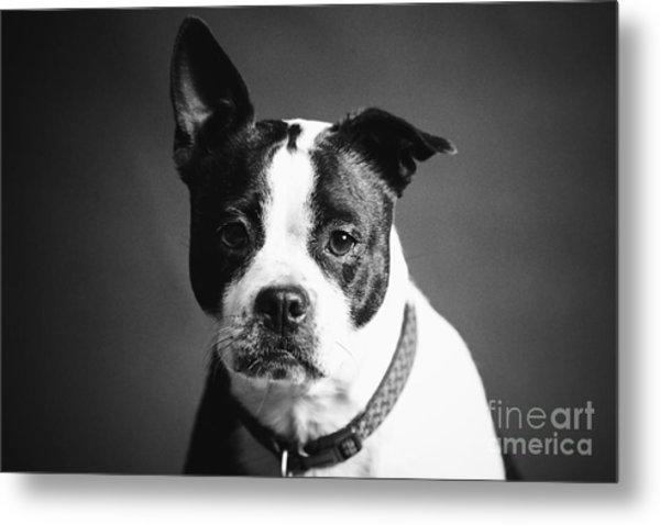 Dog - Monochrome 1 Metal Print
