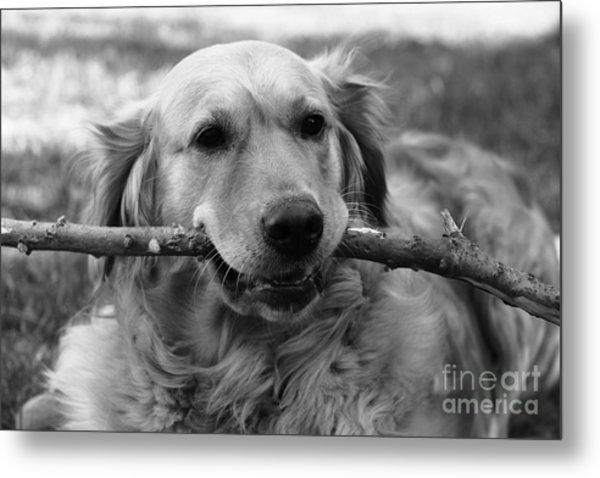 Dog - Monochrome 4 Metal Print