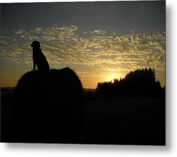Dog On Hay Greeting Sunrise Metal Print