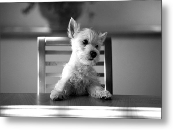 Dog Sitting On The Table Metal Print