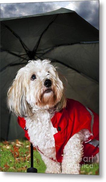 Dog Under Umbrella Metal Print