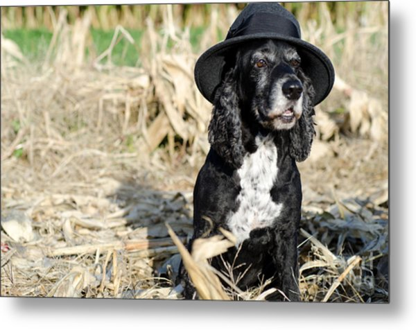 Dog With A Hat Metal Print