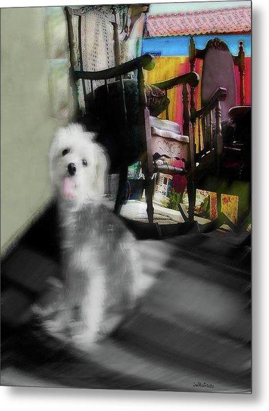 Dogie In The Patio Art  Metal Print