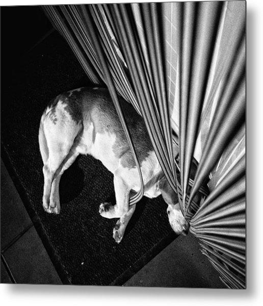 Dog.net  #dog #animal #pet #instadog Metal Print