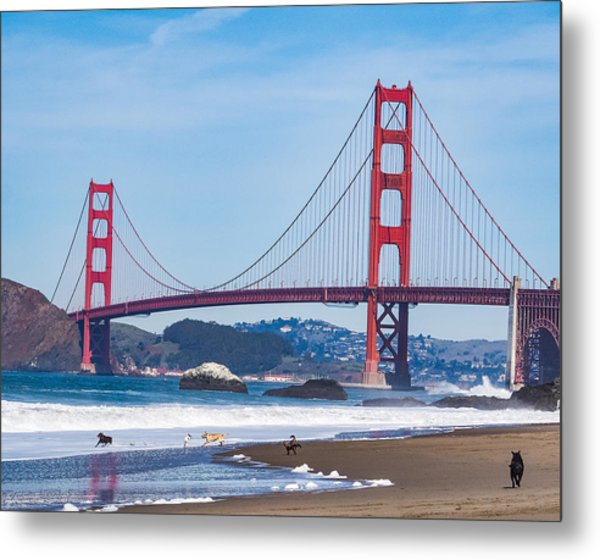 Dogs At The Golden Gate Bridge Metal Print