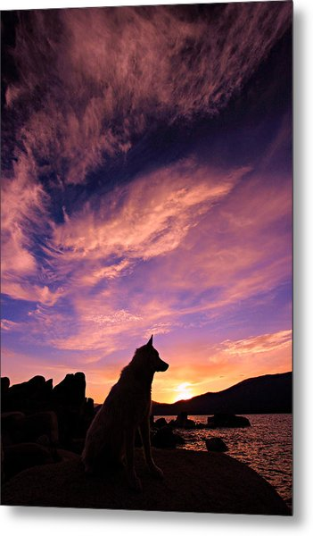 Dogs Dream Too  Metal Print
