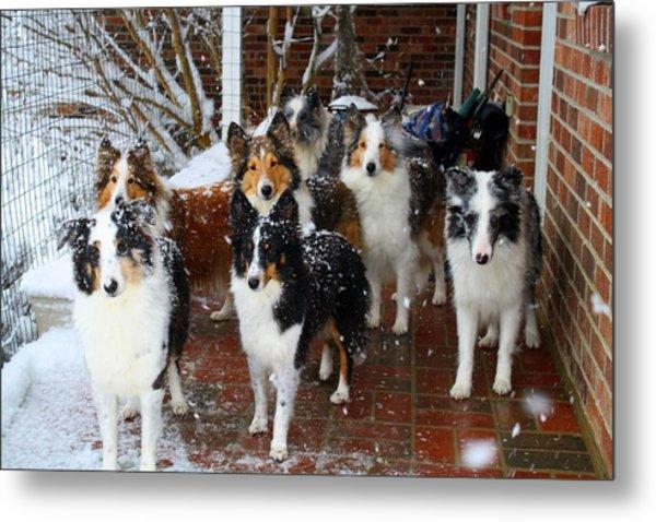 Dogs During Snowmageddon Metal Print
