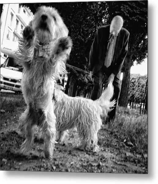 #dogsofinstagram #doglover #dog #animal Metal Print