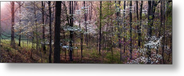 Dogwoods At Sunset Metal Print by Lloyd Grotjan