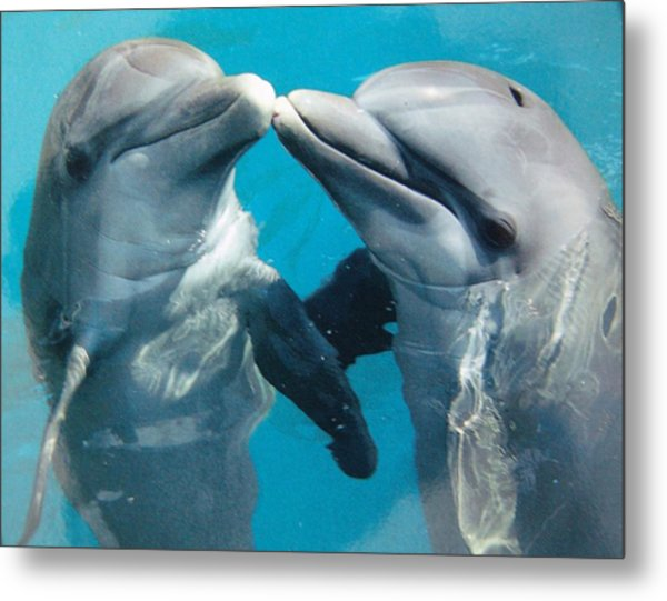 Dolphin Play Metal Print
