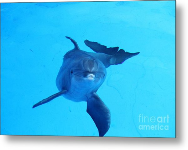 Dolphin Underwater Metal Print