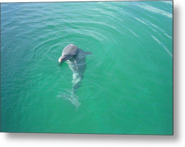 Dolphin Upclose Metal Print