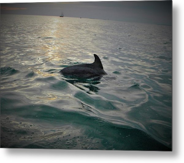 Dolphin Watching Metal Print