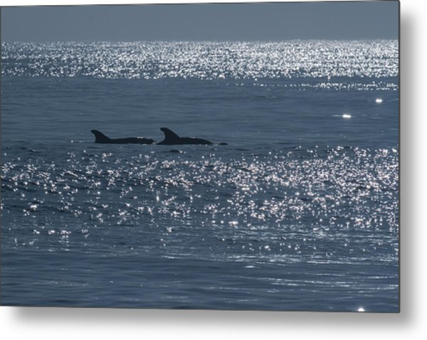 Dolphins And Reflections Metal Print