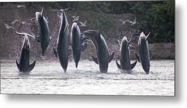 Dolphins Jump Metal Print