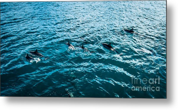 Dolphins Off Of The Na Pali Coast Metal Print