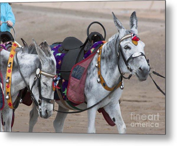 Donkeys On Blackpool Beach Metal Print