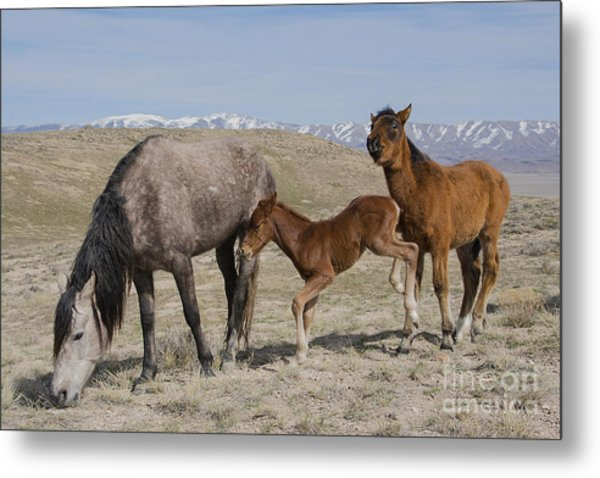 Don't Worry Mom I Got This... Metal Print by Nicole Markmann Nelson