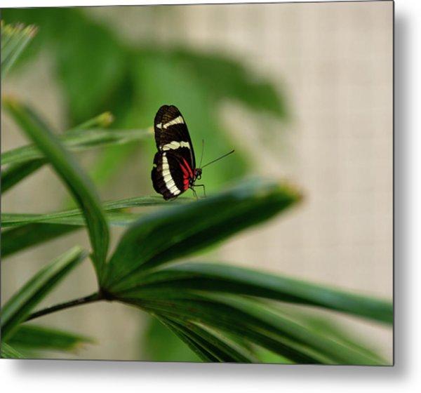 Doris Longwing Butterfly Metal Print