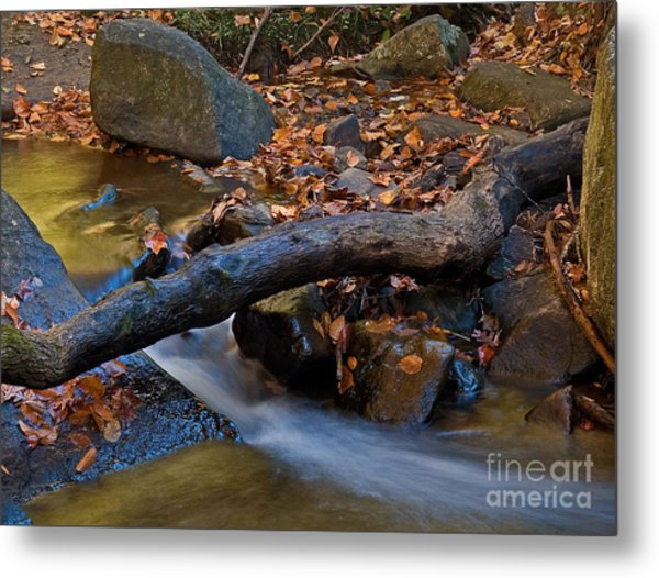 Down By The River Metal Print by Robert Pilkington