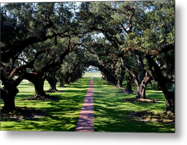 Down The Path Metal Print