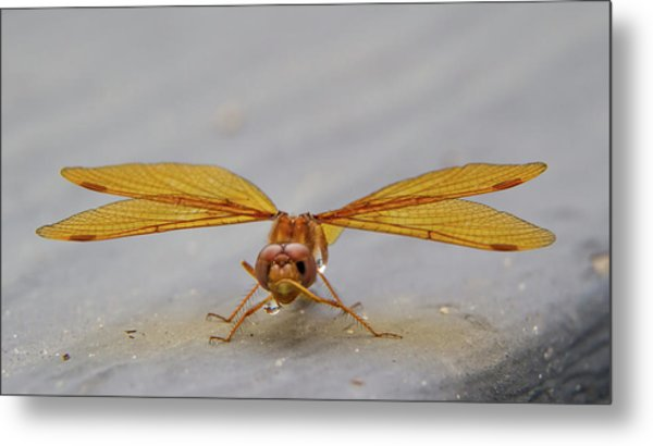 Dragon Fly Hanging Around Metal Print