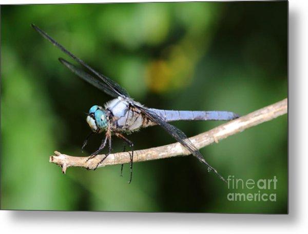 Dragonfly Portrait Metal Print