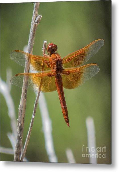 Dragonfly 10 Metal Print