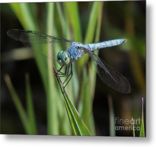 Dragonfly 13 Metal Print