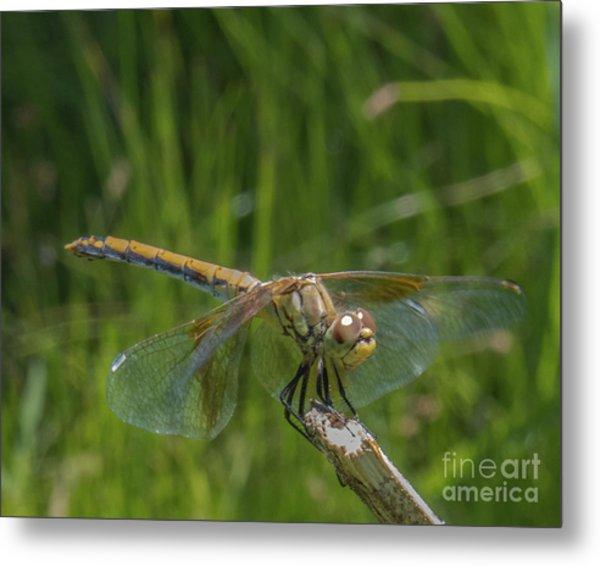 Dragonfly 7 Metal Print