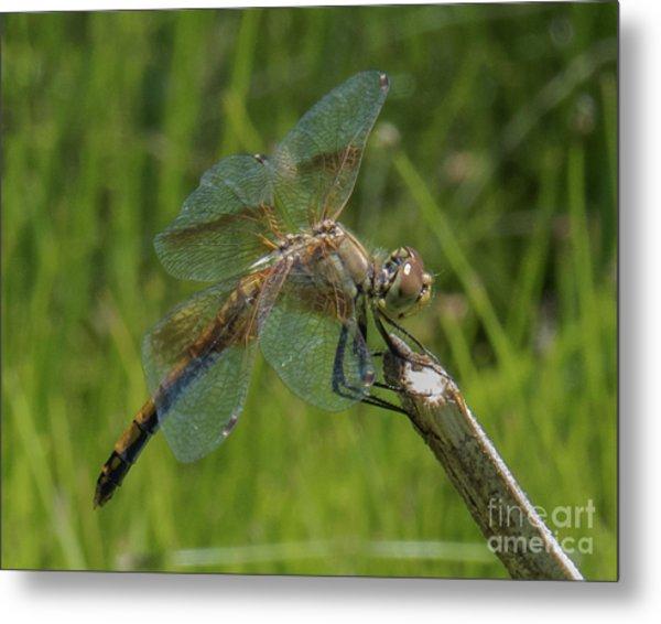 Dragonfly 8 Metal Print