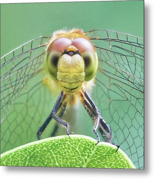 Dragonfly Face Metal Print by Jim Hughes