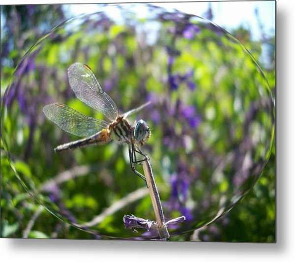 Dragonfly In Bubble Metal Print