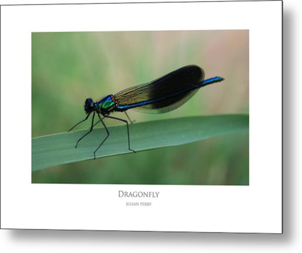 Metal Print featuring the digital art Dragonfly by Julian Perry