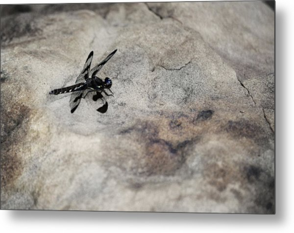 Dragonfly On Solid Ground Metal Print