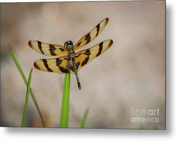 Dragonfly On Grass Metal Print