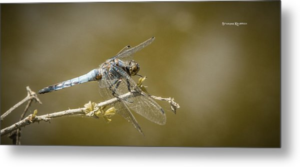 Metal Print featuring the photograph Dragonfly On The Spot by Stwayne Keubrick