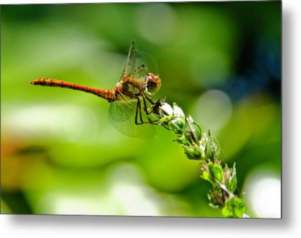 Dragonfly Sitting On Flower Metal Print