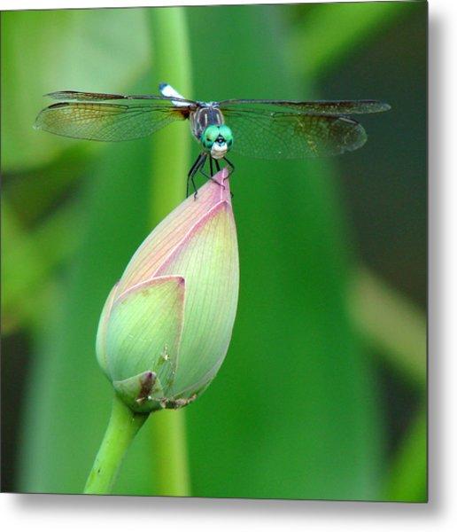 Dragonfly Va 1 Metal Print