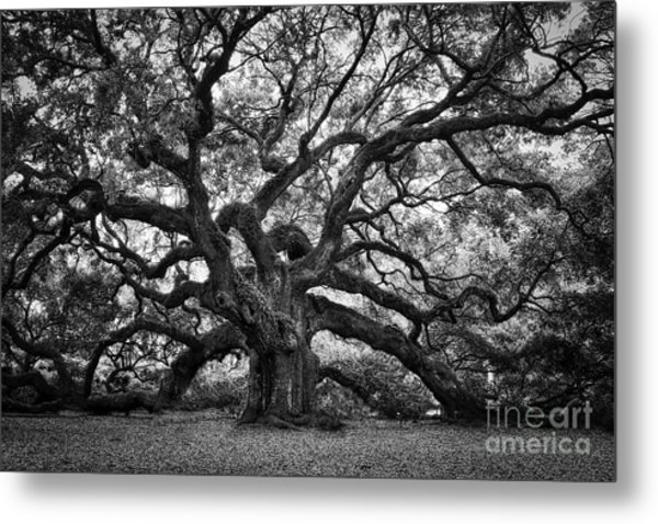 Dramatic Angel Oak In Black And White Metal Print