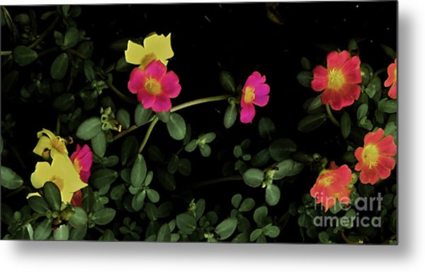 Dramatic Colorful Flowers Metal Print