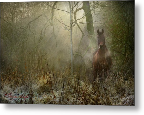 Dream Forest Metal Print