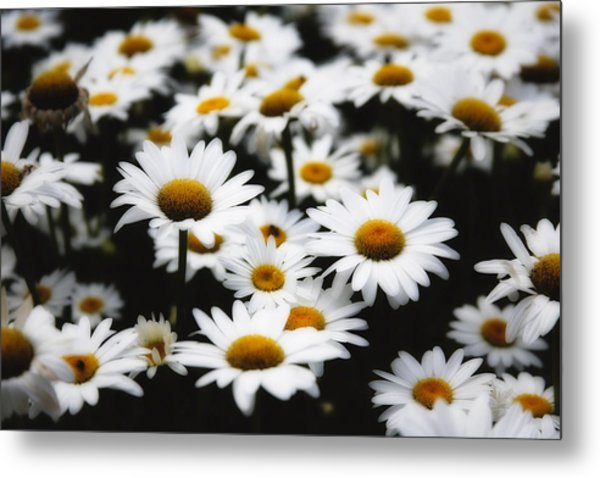 Dreaming Daisies Metal Print by George Oze