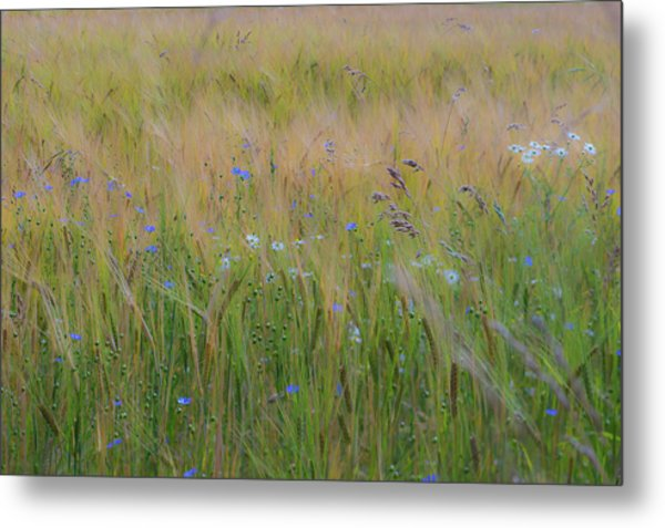 Dreamy Meadow Metal Print