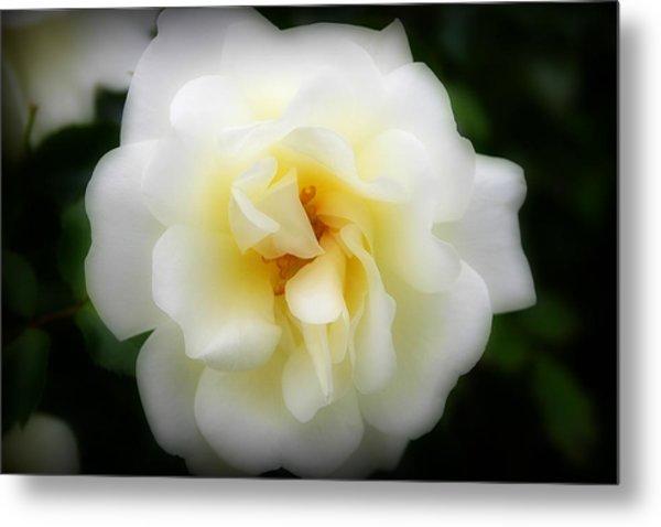 Dreamy White Rose Metal Print
