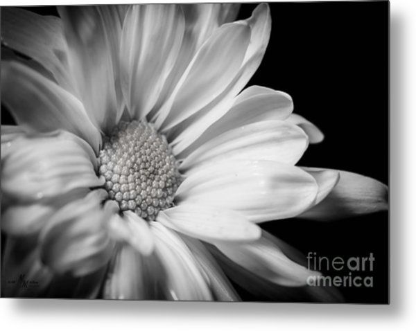 Dressed In Black And White Metal Print