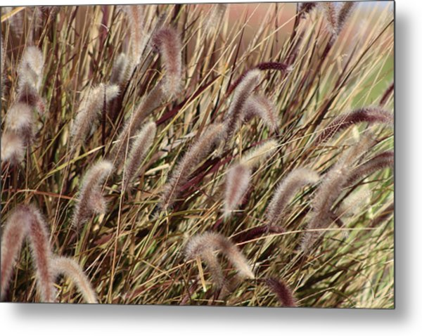 Dried Grasses In Burgundy And Toasted Wheat Metal Print