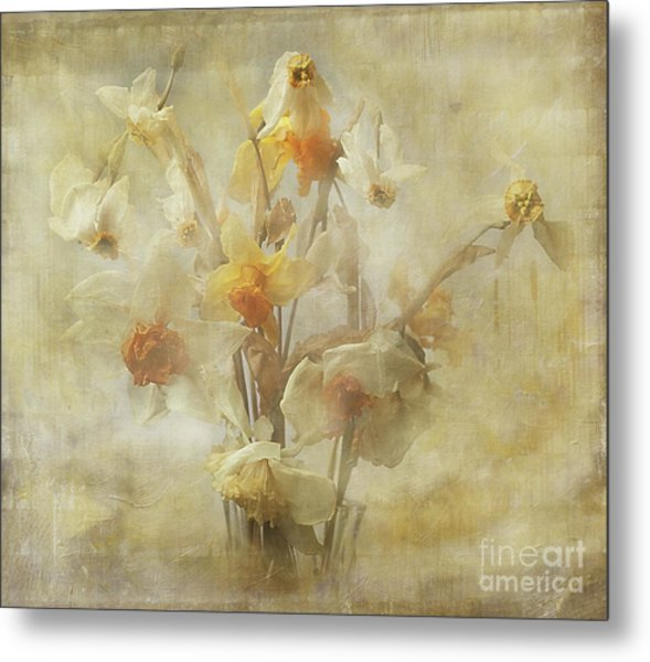 Dried Narcissus Metal Print